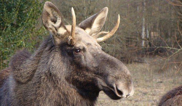 Espace faune forêt dOrient