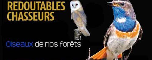 Les-oiseaux-de-nos-forêts