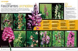 orchidées-sauvages-de-l'Aube