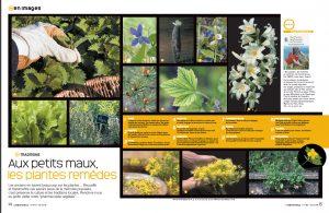 plantes-remèdes-de-l'Aube