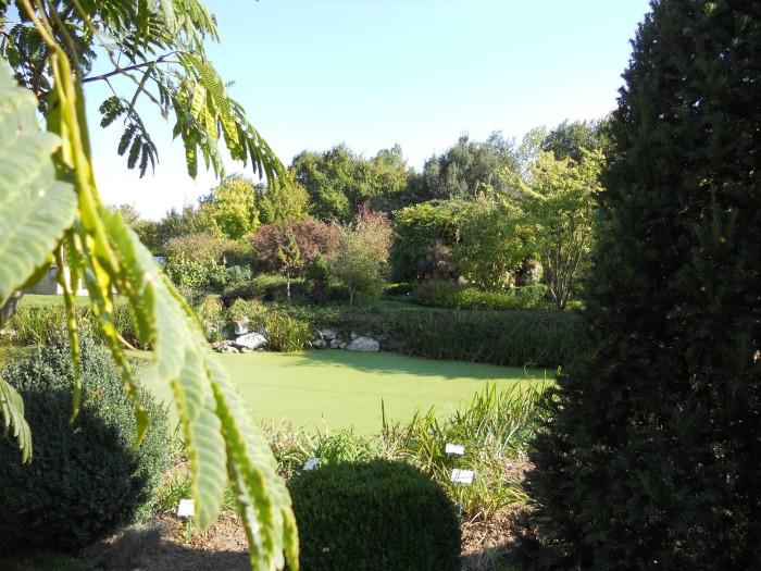 Jardin botanique de Matnay - marre
