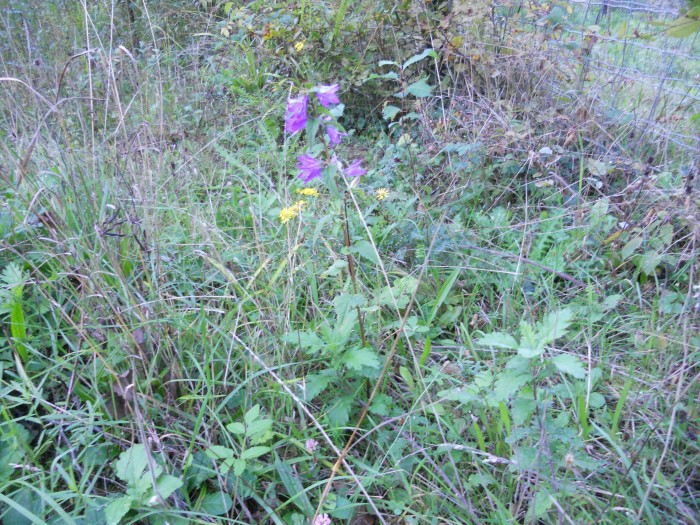Fleurs espace faune