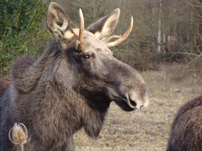 Espace faune forêt d'Orient - Crédit PJ Carles ONF (1)