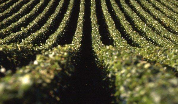 Paysage-9-Crédit-photo-Ph.PRALIAUD-CDT-AUBE-600x350