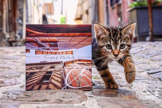 Troyes-ptits-chat---Olivier-douard-pour-Maison-Caffet