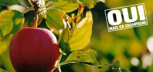Pomme du pays d'othe