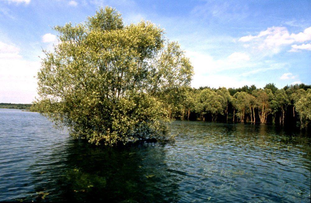 Lac-Orient