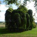 Le circuit des arbres remarquables du pays d'Othe-Armance et Chaourçois