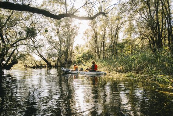 Kayak en forêt