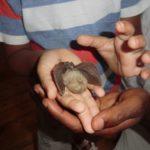 En quête des chauves-souris et autres sorties nature
