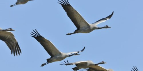 Ornithologie