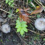 Une grande sortie découverte des champignons