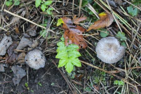 Sortie champignons