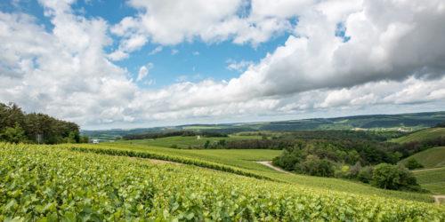 Vignes Les Riceys - CDT Aube