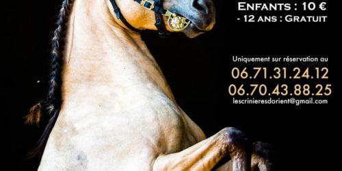 Cabaret-equestre-resa-768x1086