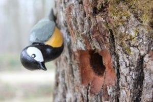 L'ornithologie classe poussin