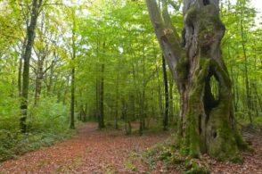 Les arbres remarquables du Pays d'Othe