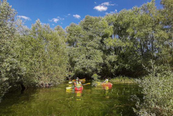 Kayak dans la forêt immergée