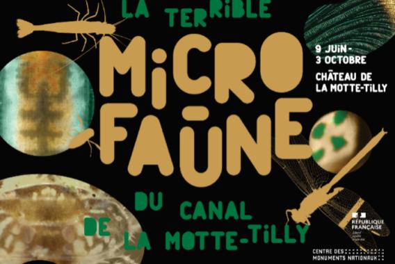 La terrible Micro Faune du canal de la Motte Tilly